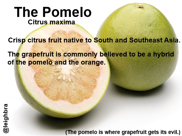 Pomelo, source of grapefruit's evil.