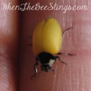 Ladybug Soft Wings